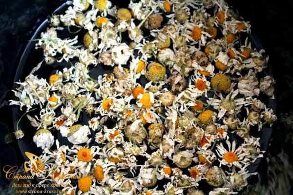 завариваем цветки ромашки
